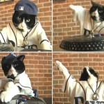 Tampa Bay Rays - DJ Kitty