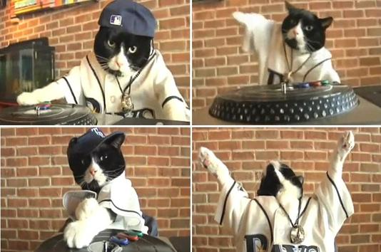 Tampa Bay Rays - DJ Kitty